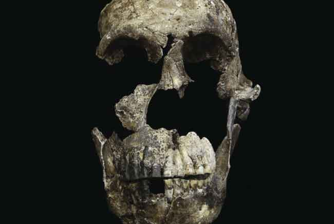 Early human fossils found in South African cave system