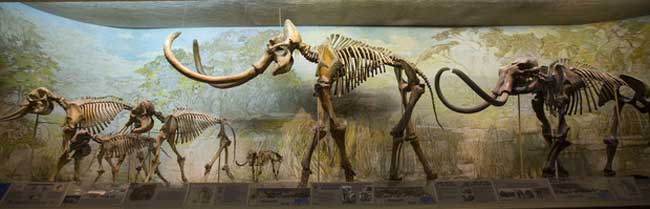 Unprecedented Wave of Large-Mammal Extinctions Linked to Ancient Humans