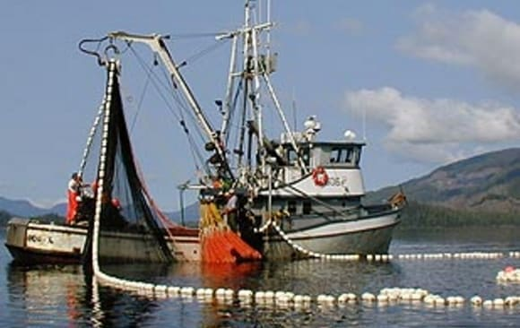Commercial salmon seiner. Image-ADF&G