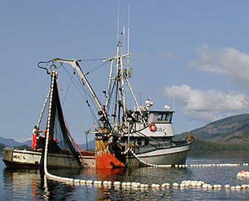 Alaska Board of Fisheries Cuts Kodiak's Salmon Allocation