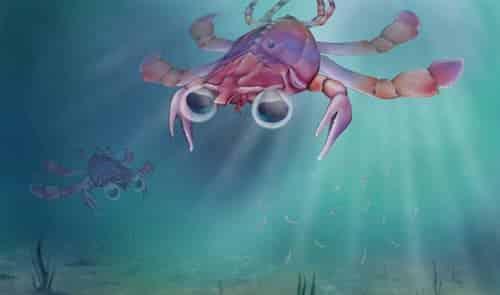Meet Callichimaera Perplexa, the Platypus of Crabs