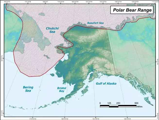 How to Conserve Polar Bears — and Maintain Subsistence Harvest — under Climate Change