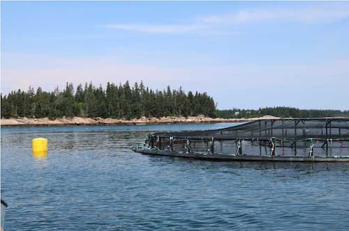 Moratorium Proposed on Finfish Aquaculture Facilities