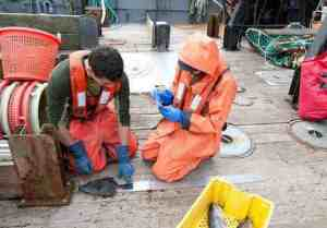 Fishery observers Sean Sullivan and Virginia Taggert measure and record the size of fish. Image-NOAA Fisheries