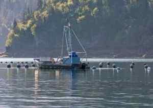 Oyster farm in Kachemak Bay, Alaska. Photo by Dave Partee/Alaska Sea Grant.