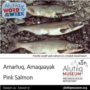 Pink Salmon-Alutiiq Word of the Week-June 14th