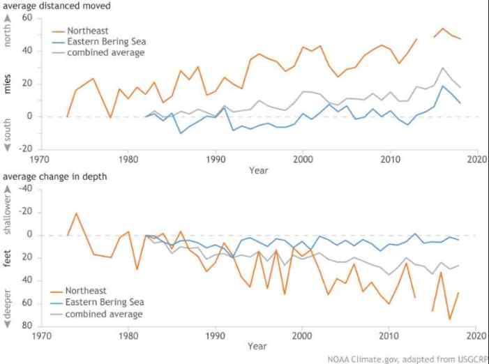 In Search of Cooler Waters, Marine Species Are Shifting Northward or Diving Deeper