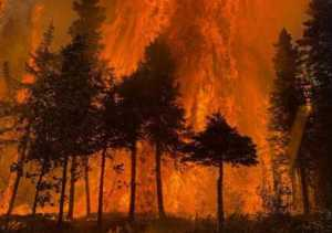 Photo courtesy of Alaska Fire Service The Swan Lake fire rages in a forest on the Kenai Peninsula in 2019.