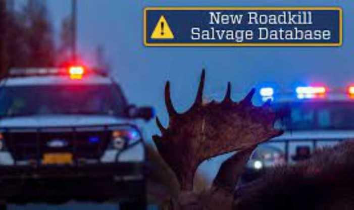 Community: Alaska Wildlife Troopers to Launch New Roadkill Salvage Database