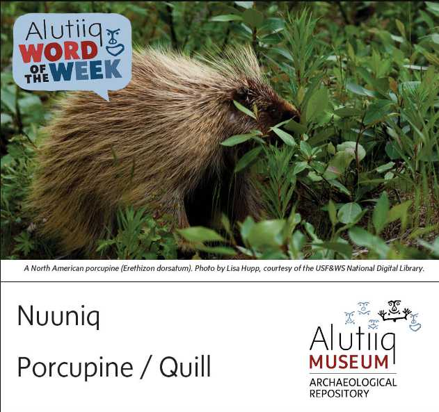 Porcupine-Alutiiq Word of the Week-August 8th
