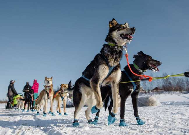 Iditarod Kicking off 50th Anniversary with Big Cash Prizes in Summer Raffle