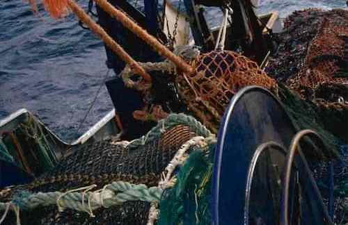 Alaska Fishermen ask Governor Dunleavy and North Pacific Fishery Management Council to Change Course on Fisheries Management