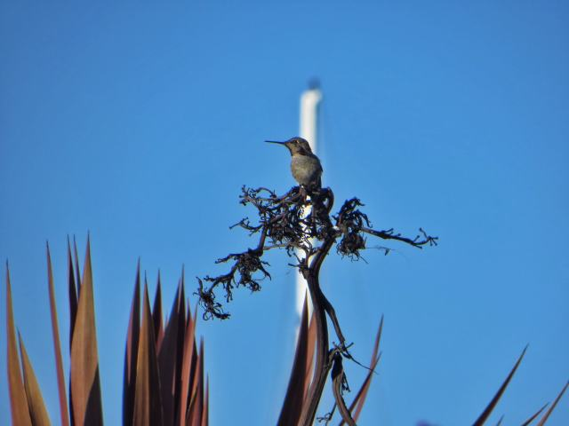 Kolibri, San Francisco