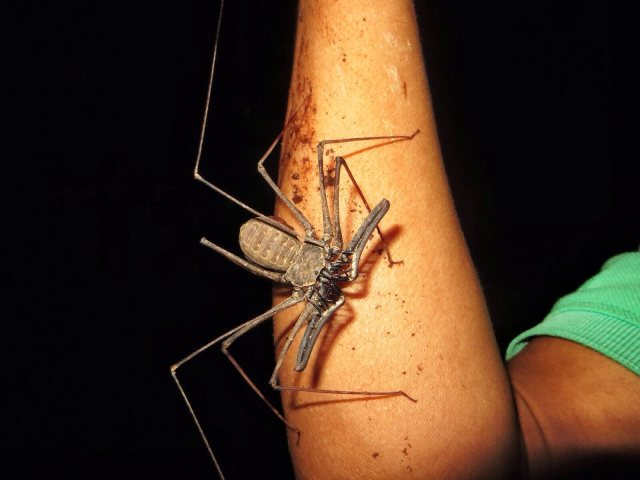 Hämähäkin ja skorpionin mutanttiserkku
