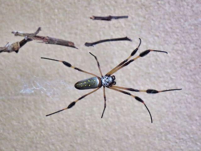 Hämähäkki, El Castillo.