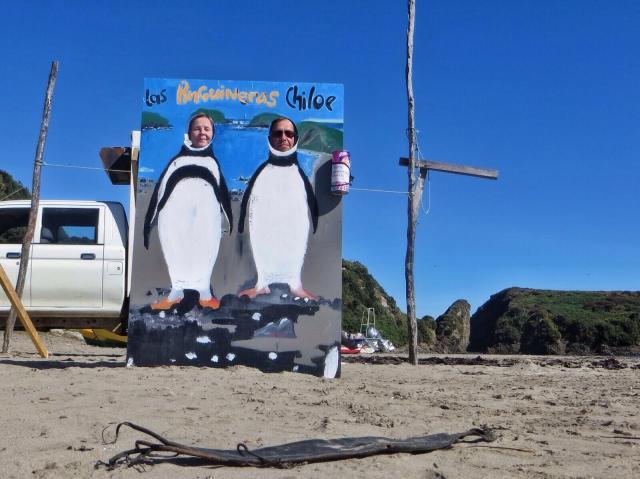 Vasemmalla patagonianpingviini (magellanic penguin), oikealla perunpingviini (humboldt penguin).