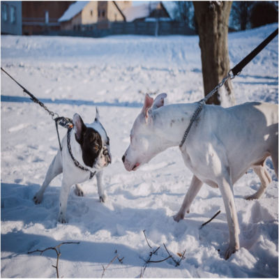 Two dogs encountering each other on leashes