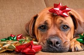 Christmas Puppy Alaska Dog Works