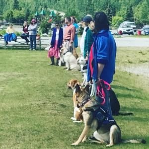 job openings at alaska dog works