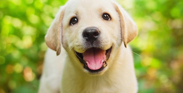 How long does it take to train a puppy? - Alaska Dog Works
