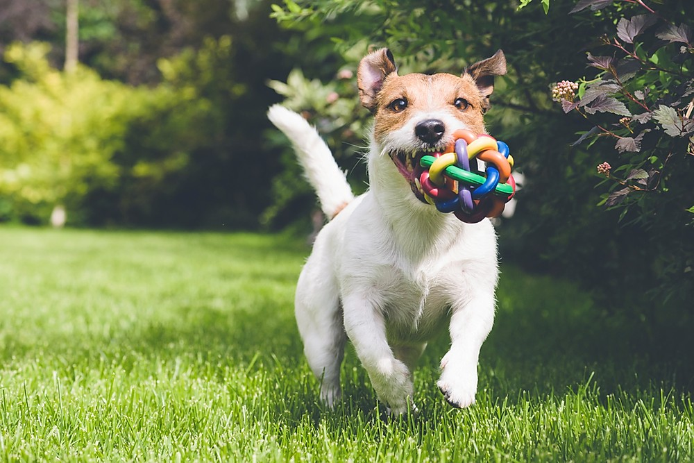 Food is not the only reward in dog training Alaska Dog Works