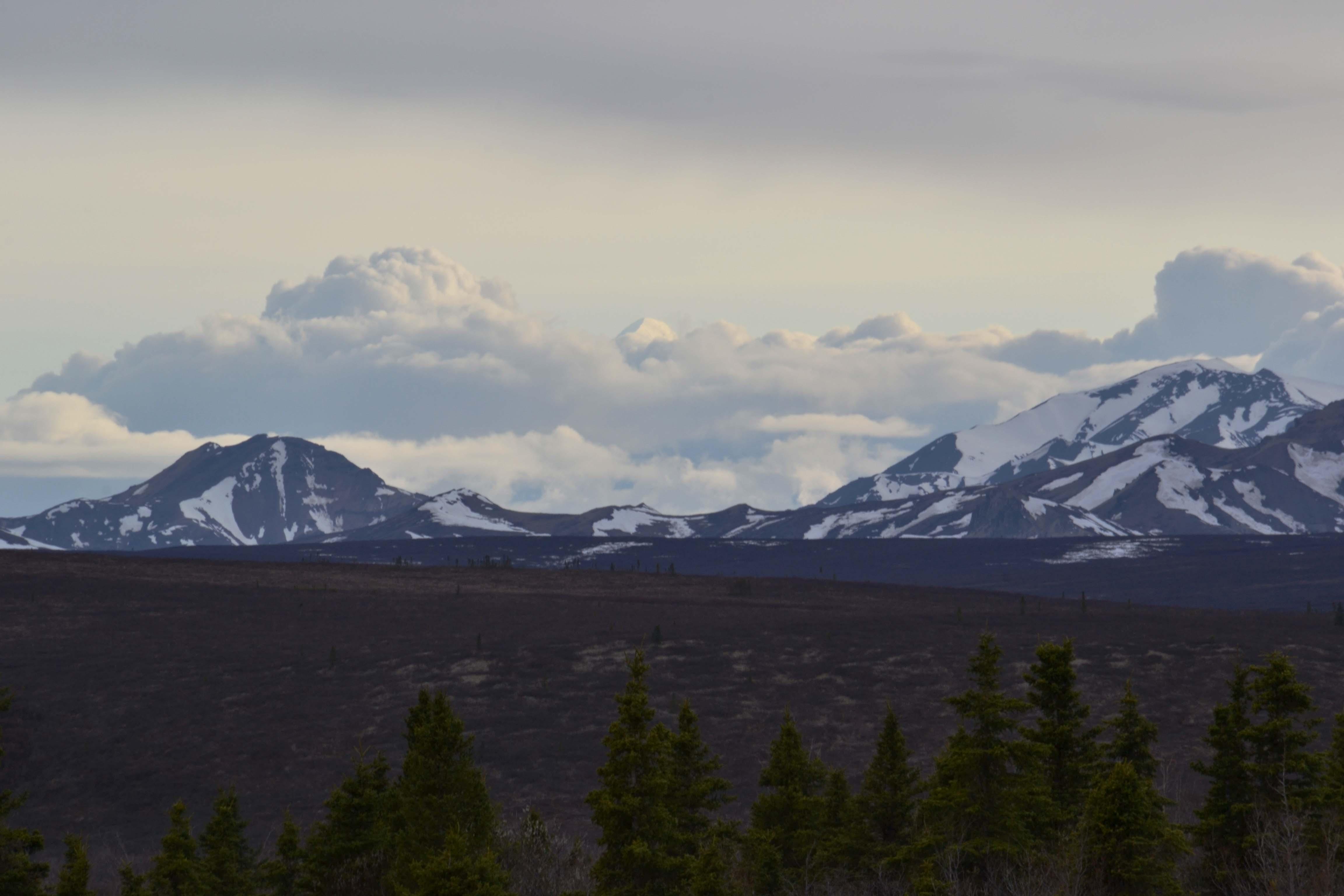 DNP - Landscape