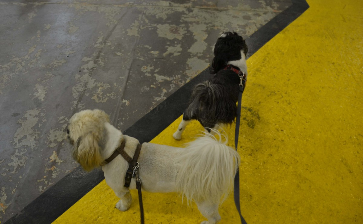 Dogs on the Alaska Marine Highway System (Alaska Ferry)