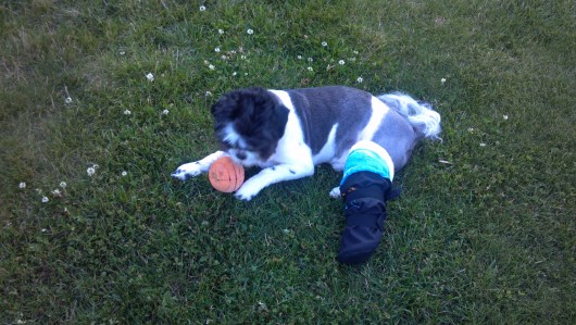 Aker and His Cast/Bootie