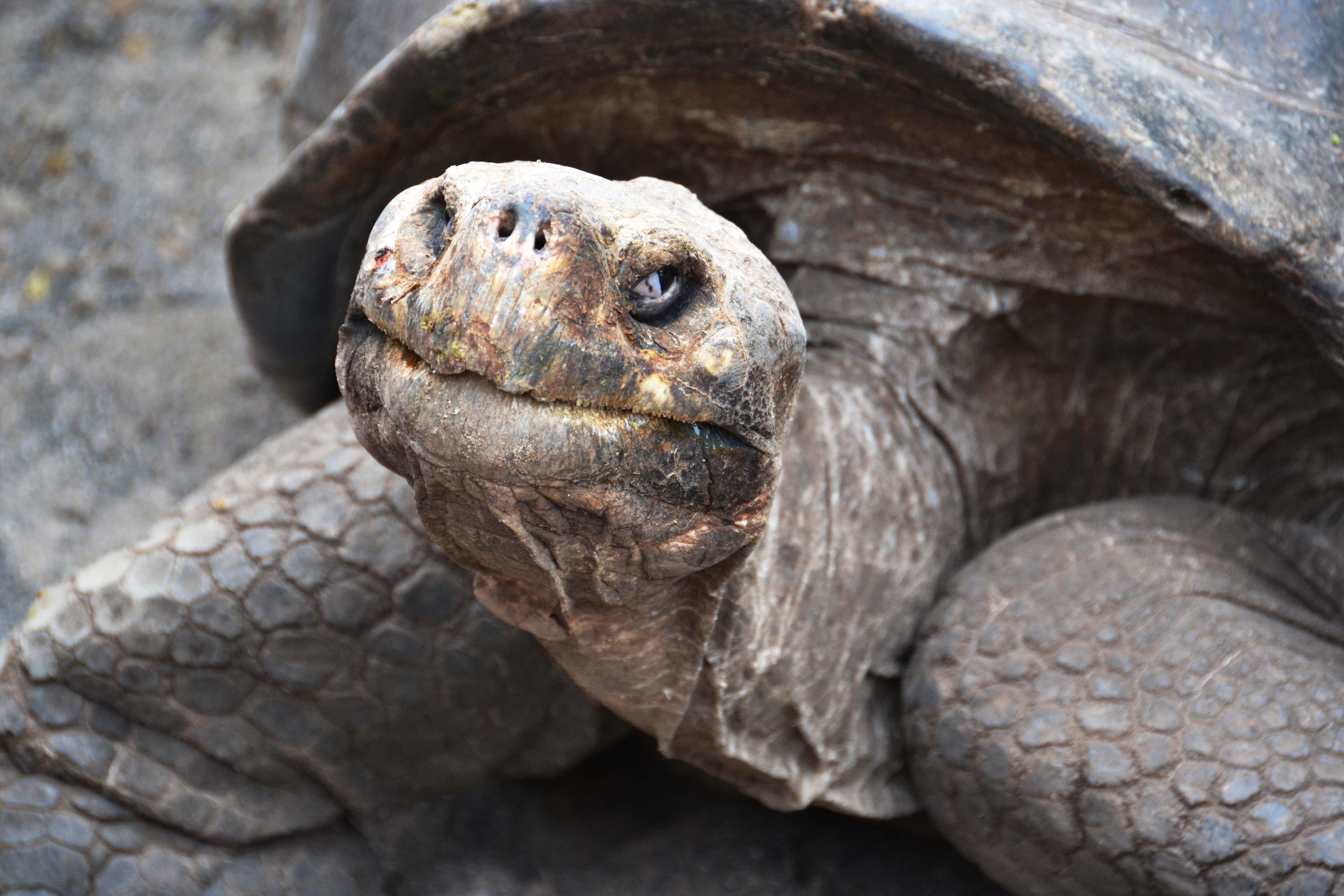 Male Tortoise Close-up