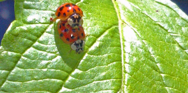 Lady Bug Love