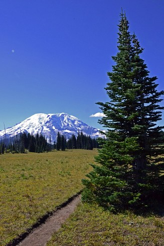 Mount Rainier with Foreground Tree