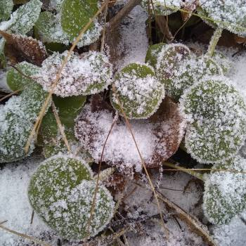 25 Herbs and Plants You Can Collect During Winter