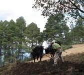 Preparing for planting corn
