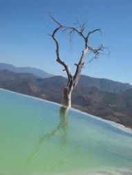 Photogenic poolside tree