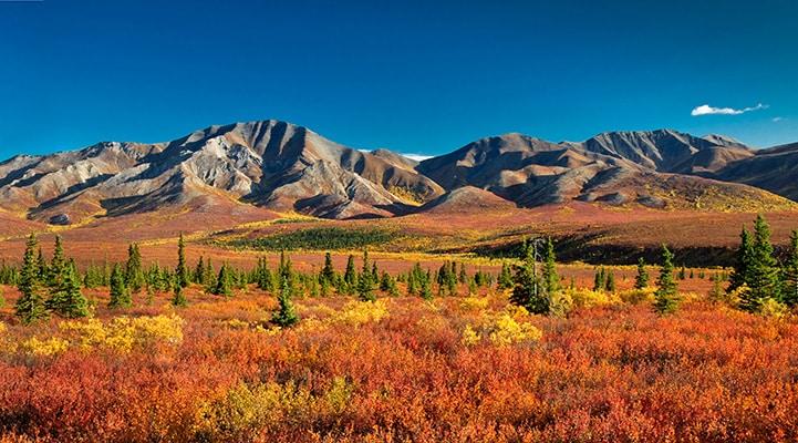 Broad Pass Alaska