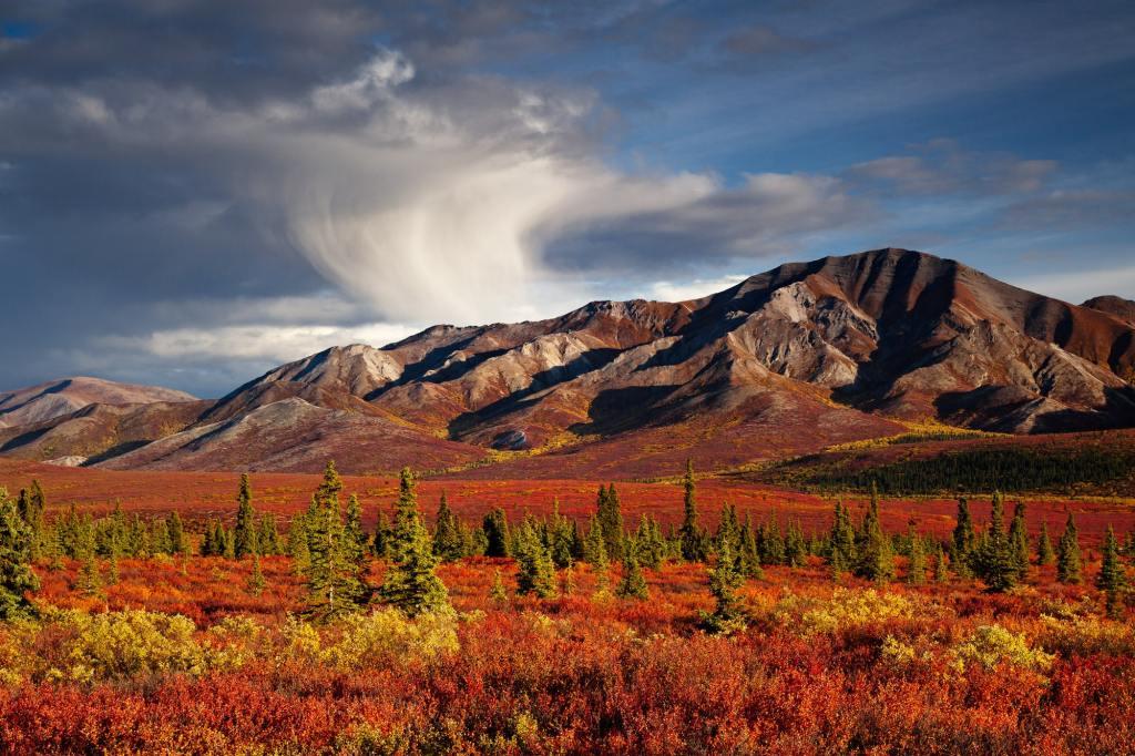 fall foliage colors in Denali, Alaska