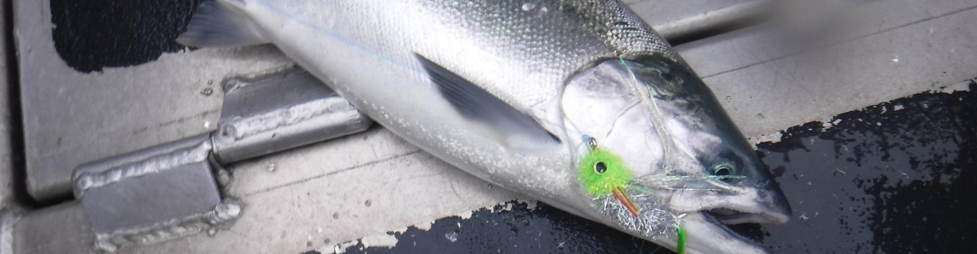 Advisory meetings good start to 2018 fishing plans