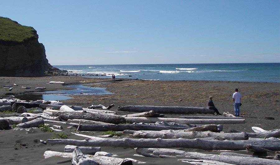 beach with logs and a few people