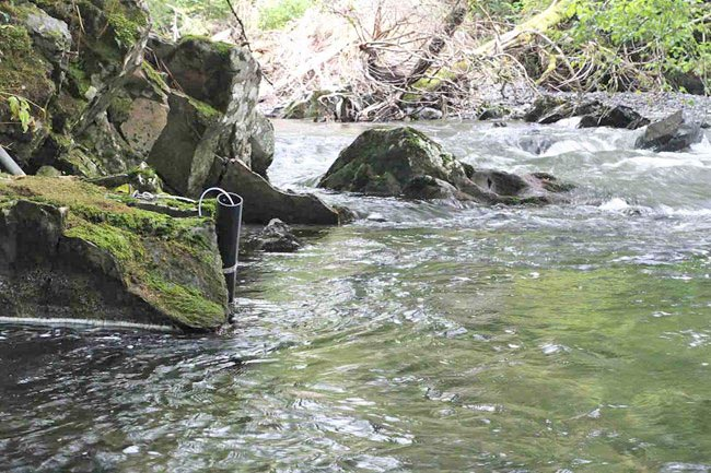 black tube partially submerged at the edge of a stream.