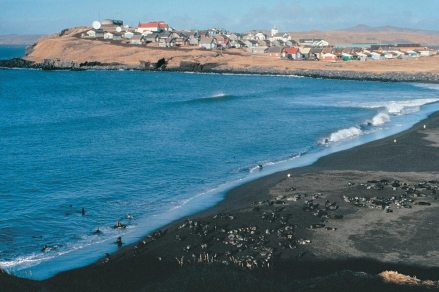 a beach with seals, and buildings of a small community in the background