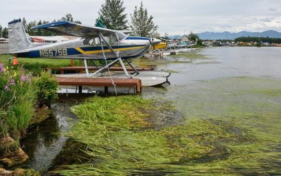 float planes docked around a lake, with green plants in the water
