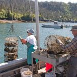 Man and woman tending oyster nets