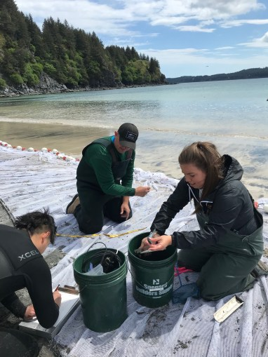 Three people next to the water sorting buckets of small fish.rt