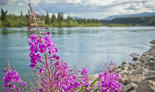 Fireweed by the Lake, AK: Alaska shore excursions from Alaska Shore Tours