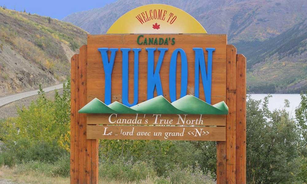 Yukon Discovery Sled Dog