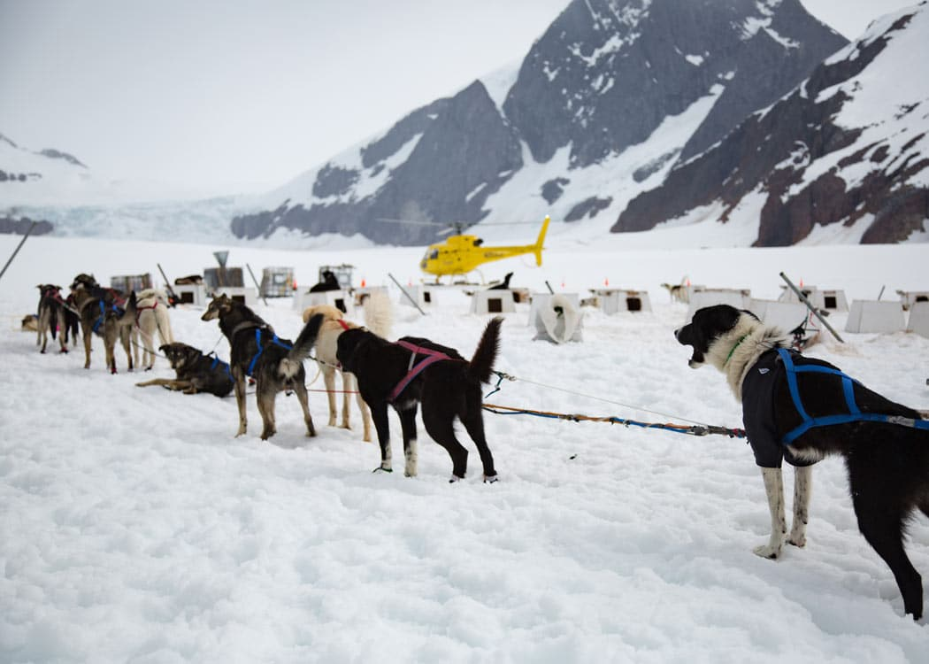 Juneau Helicopter Dogsled Glacier Excursion with Alaska Shore Tours