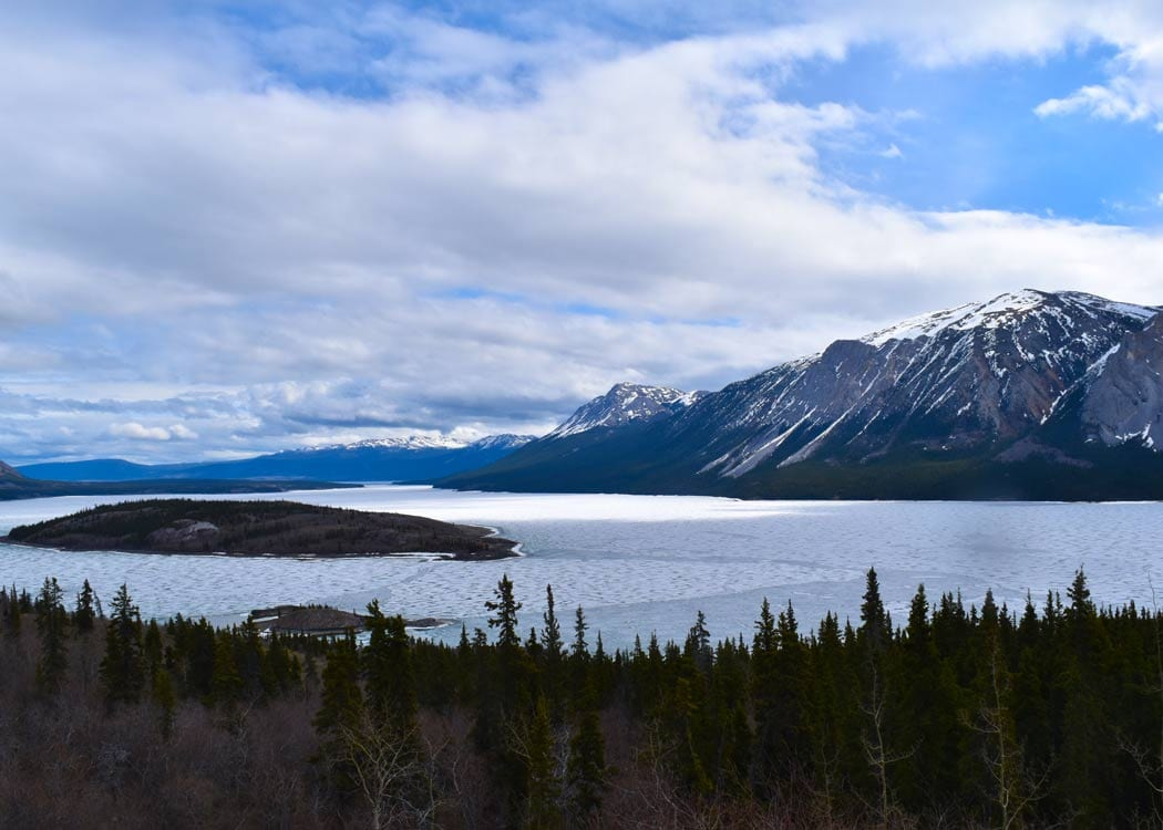 Yukon Discovery and Sled Dog Alaska Shore Excursions