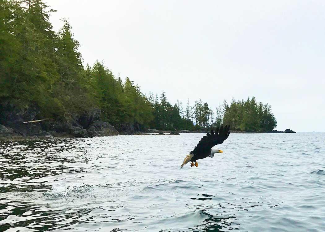 Backcountry Zodiac Expedition Alaska Shore Excursions