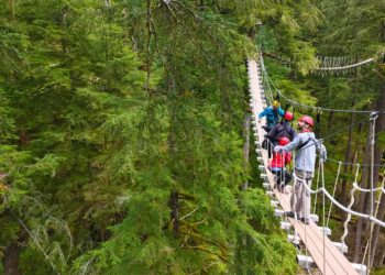 Rainforest Canopy and Zipline Alaska Shore Excursions