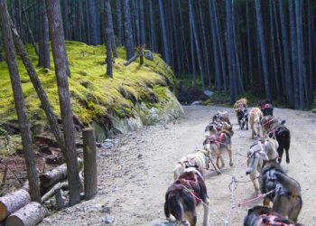 Skagway Sled Dog Alaska Shore Excursions